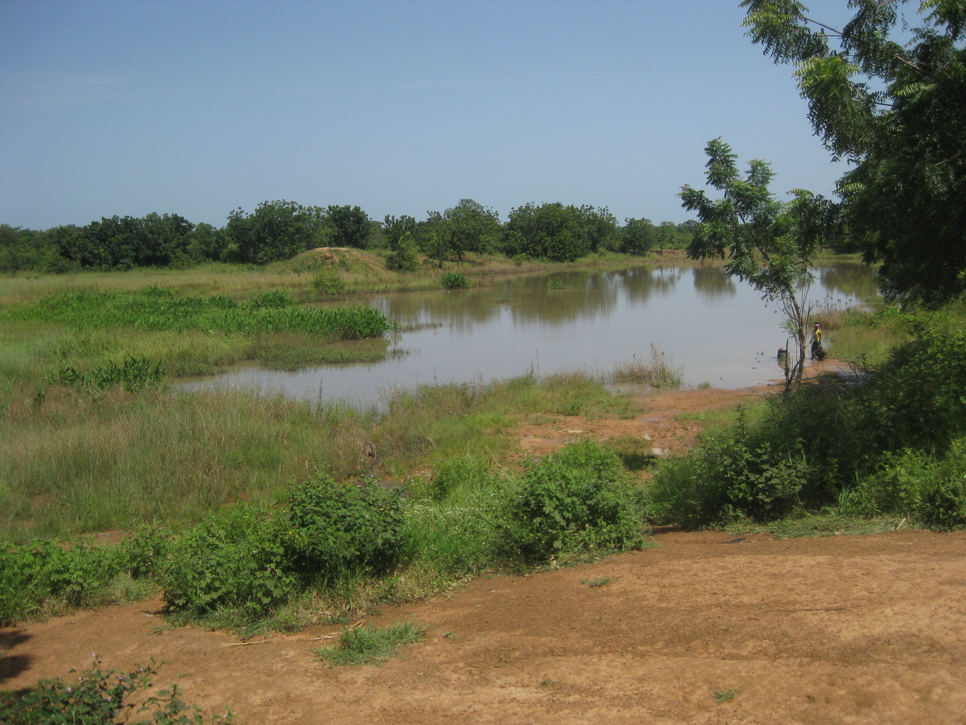 The Jerigu Dugout- a shallow, stagnant, mad-made pond.  This is their only source of water.