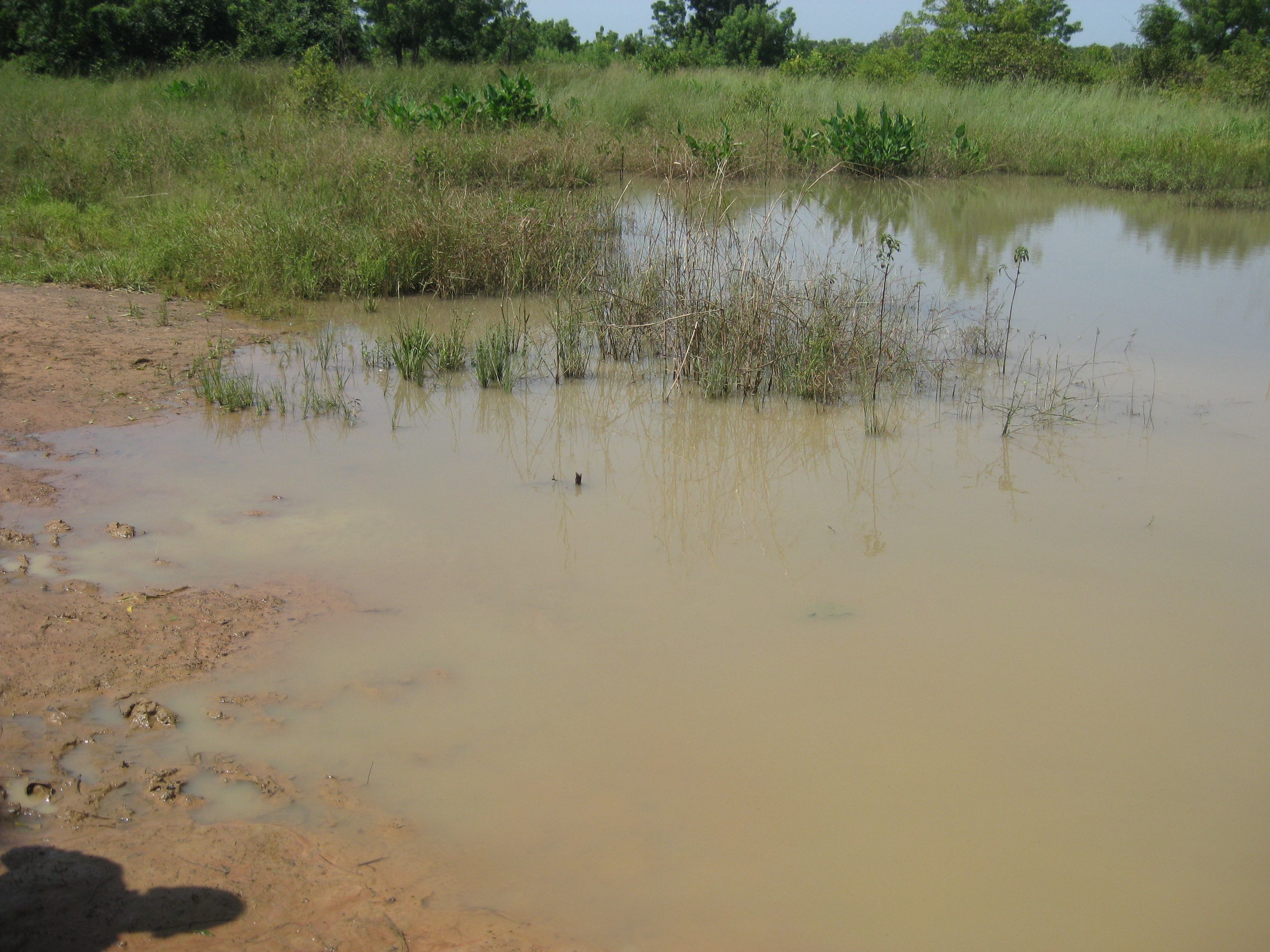 Close up of the Jerigu dugout.  People frequently ask us what water the people villages were drinking before we got there, well, this is it.