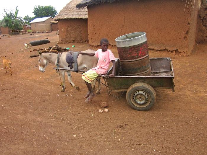 Donkey seller